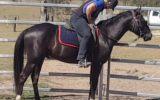 Black Smoke on HorseYard.com.au (thumbnail)