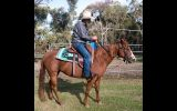 Quarter Horse Mare, Rosas Para Jacqui on HorseYard.com.au (thumbnail)