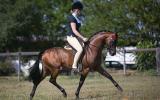 STUNNING riding pony colt on HorseYard.com.au (thumbnail)