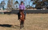 Canterbury TB Mare on HorseYard.com.au (thumbnail)