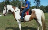 Prince on HorseYard.com.au (thumbnail)