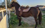 Stock horse QH X on HorseYard.com.au (thumbnail)