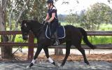 Radar WB X,, done L3 hracv, loves to jump, gorgeous looking boy with a gorgeous smoochy personality! on HorseYard.com.au (thumbnail)