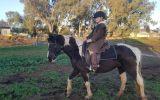 Stunning black Tobiano  on HorseYard.com.au (thumbnail)