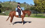Striking Thoroughbred with huge show potential  on HorseYard.com.au (thumbnail)