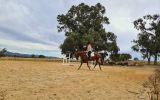 15.2 chestnut tb 9 year old on HorseYard.com.au (thumbnail)