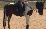 Stunning Pinto Mare on HorseYard.com.au (thumbnail)