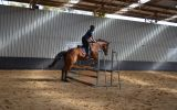 Potential Eventer 5YO TB on HorseYard.com.au (thumbnail)