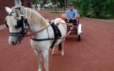 Harness pony and cart on HorseYard.com.au (thumbnail)