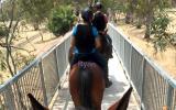Sweet, sensible gelding. on HorseYard.com.au (thumbnail)