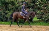 PRICE REDUCED FOR QUICK SALE on HorseYard.com.au (thumbnail)