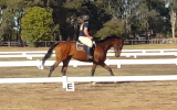 Clemente on HorseYard.com.au (thumbnail)
