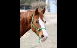 Rope Halters on HorseYard.com.au (thumbnail)