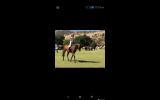 Lockstar 'Locky' on HorseYard.com.au (thumbnail)