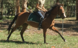 STUNNING MARE on HorseYard.com.au (thumbnail)