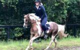 Educated Show Hunter Pony - 4th Novice Show Hunter Class Sydney Royal 2021 on HorseYard.com.au (thumbnail)