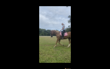 Everything you've ever wanted on HorseYard.com.au (thumbnail)