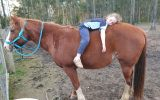 Quiet pony on HorseYard.com.au (thumbnail)
