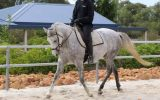 Pretty All Rounder, Quarterhorse x Arabian on HorseYard.com.au (thumbnail)