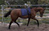 QUALITY MARE on HorseYard.com.au (thumbnail)