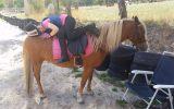 Great Second Pony on HorseYard.com.au (thumbnail)