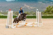 Small Pony Club Allrounder on HorseYard.com.au