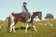 Stunning Allrounder Banjo on HorseYard.com.au