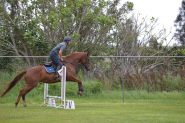 Lovely mare - suit jumping/eventing on HorseYard.com.au