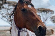 Blingy OTTB Bay Mare  on HorseYard.com.au