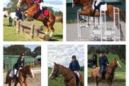 All rounder 16hh for Novice rider  on HorseYard.com.au