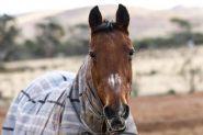 Jazzy - Mare on HorseYard.com.au