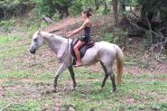 Quiet, Trustworthy Quarter Horse x Stock Horse on HorseYard.com.au