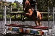 Quiet All Rounder OTTB on HorseYard.com.au