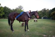 Gorgeous TB Gelding on HorseYard.com.au