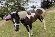 Pretty coloured filly  on HorseYard.com.au