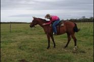 Oakey on HorseYard.com.au