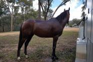 Mali on HorseYard.com.au