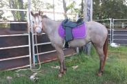 Skylah- a real stunner on HorseYard.com.au