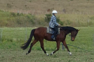 Quiet stunning bay gelding on HorseYard.com.au