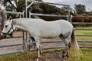 Needs to go due to health on HorseYard.com.au