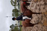 Super Childs All Rounder on HorseYard.com.au