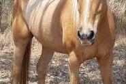 2 x mares on HorseYard.com.au