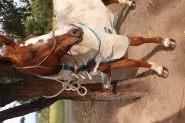 Quiet Sweet Mare on HorseYard.com.au
