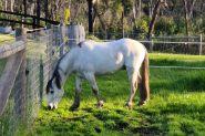 Llanfairbryn Sterling on HorseYard.com.au
