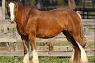 WTB: Next Project on HorseYard.com.au