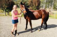 Stock horse gelding 15.1hh 5yrs on HorseYard.com.au
