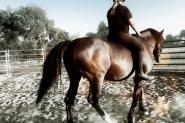 Cheap Warmblood Mare Lease or Buy on HorseYard.com.au
