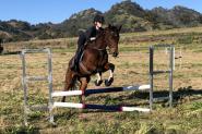 15.2h Bay TB mare on HorseYard.com.au