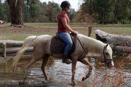 Stunning palomino  on HorseYard.com.au