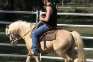 Gelding  on HorseYard.com.au